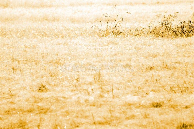 sucha śródpolna trawa zdjęcia stock