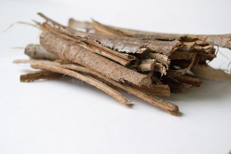 Sucha dąb barkentyna na białym tle Quercus cortex quercus Robur zdjęcia stock
