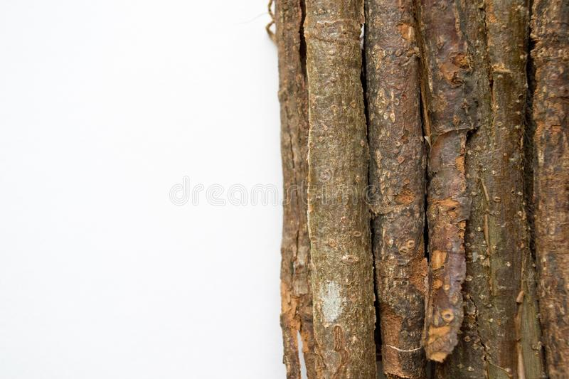 Sucha dąb barkentyna na białym tle Quercus cortex quercus Robur obraz stock