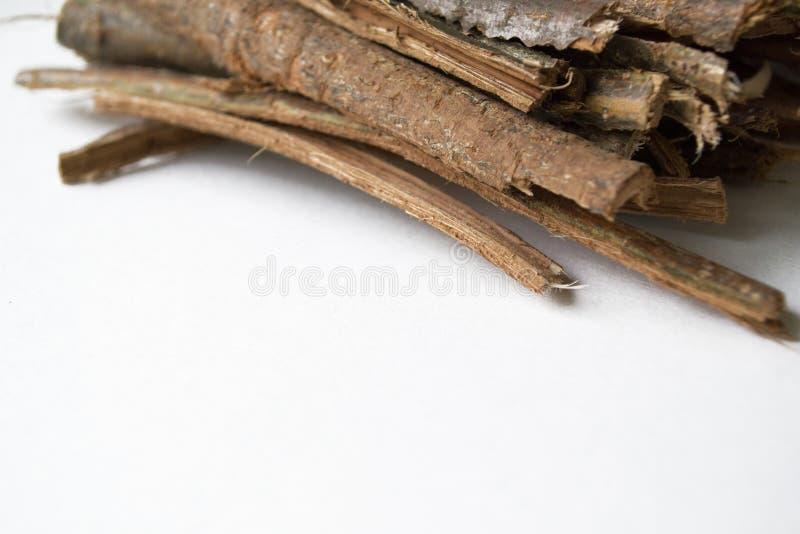 Sucha dąb barkentyna na białym tle Quercus cortex quercus Robur zdjęcia royalty free