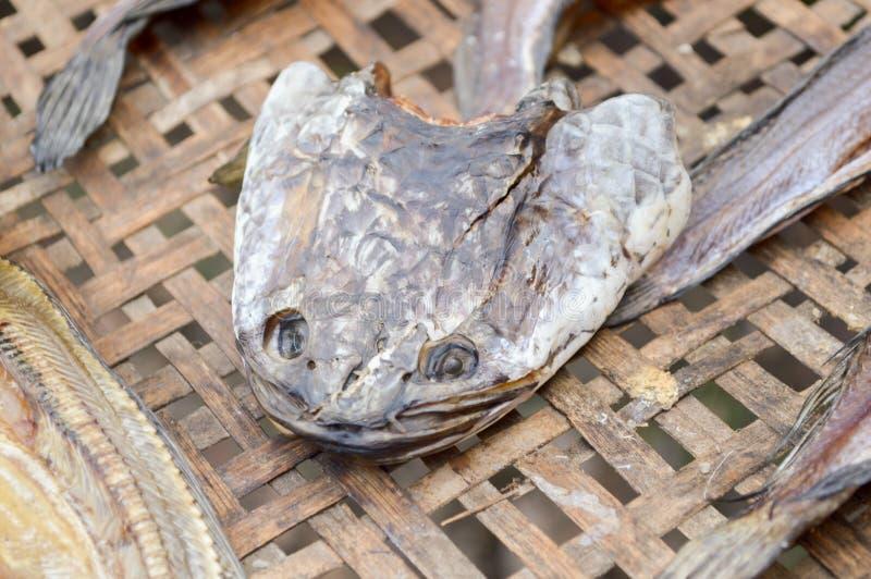 Sucha głowa paskował snakehead rybiego surowego jedzenie zdjęcie stock