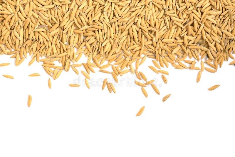 Sucha irlandczyków ryż adra na białym tle obraz stock