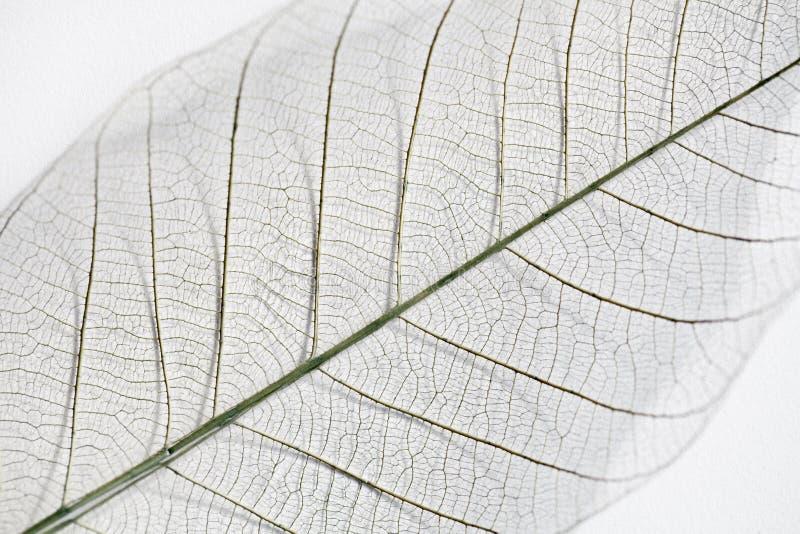 Sucha liścia szczegółu tekstura fotografia royalty free