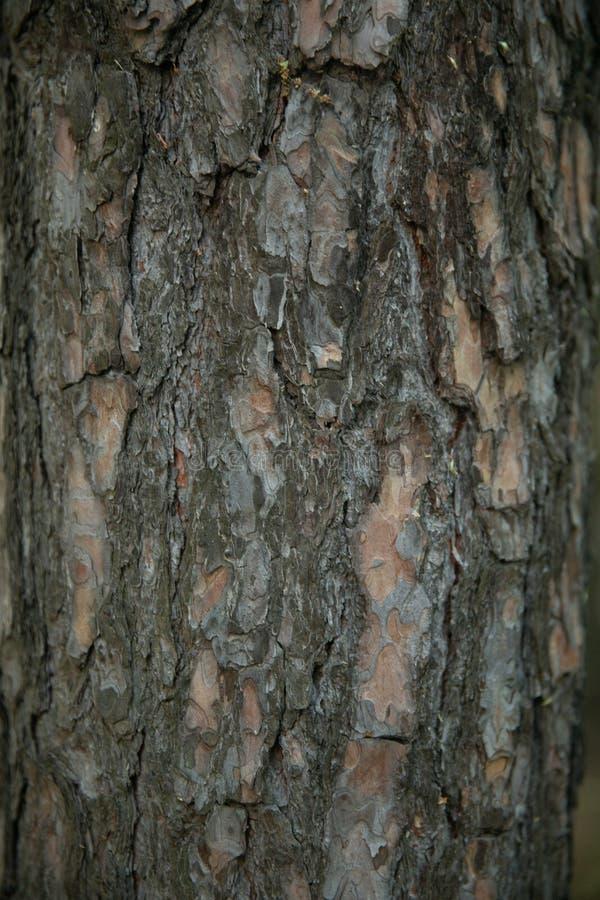 Sucha stara drzewna barkentyna pionowo zdjęcia royalty free
