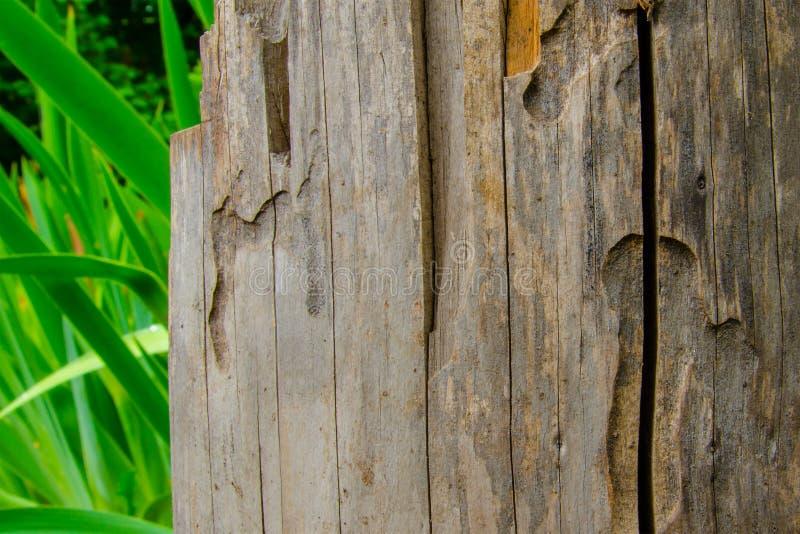 Sucha stara szara drewniana bela obrazy stock