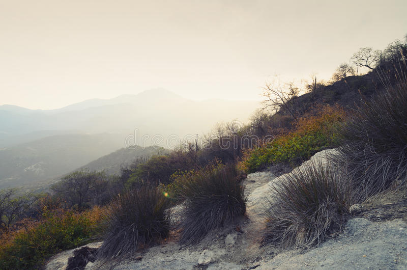 Sucha trawa i góry behind w miękkim zmierzchu świetle zdjęcie stock