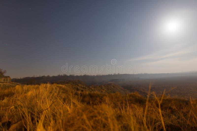 Sucha trawa w polu w blask księżyca nocy fotografia royalty free