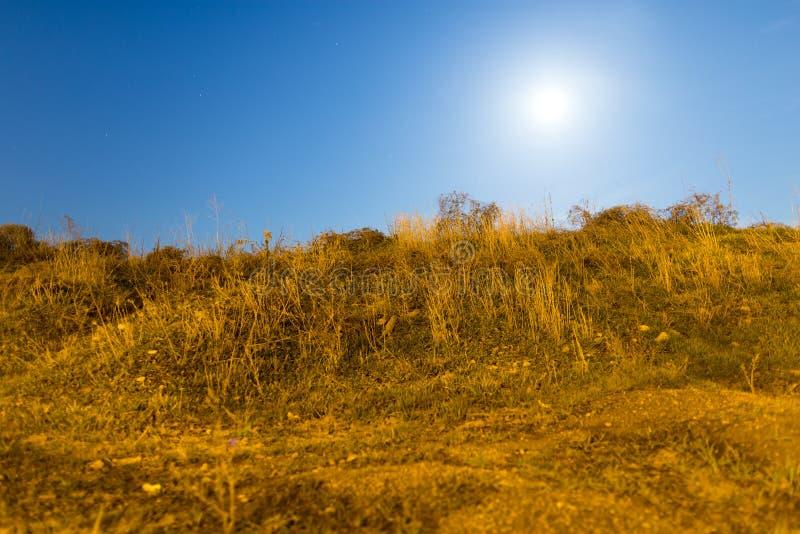 Sucha trawa w polu w blask księżyca nocy zdjęcia royalty free