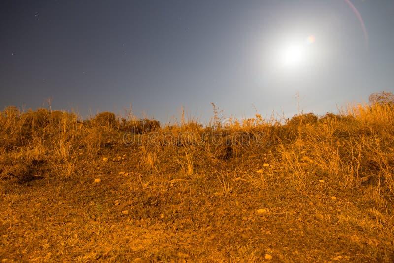Sucha trawa w polu w blask księżyca nocy obraz stock