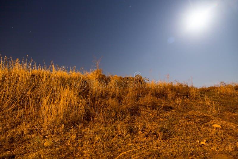 Sucha trawa w polu w blask księżyca nocy zdjęcia stock