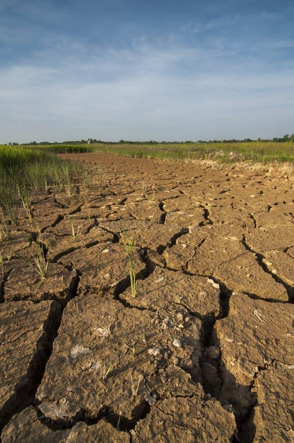 Sucha ziemia przy irlandczyka polem fotografia royalty free