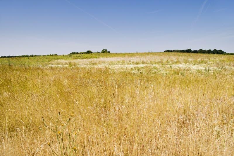 suche pastwiska zdjęcie stock