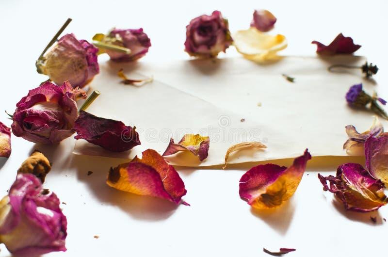 Suche róże i prześcieradło papier fotografia stock