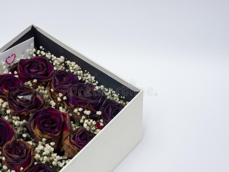 Suche róże w prezenta pudełku na białym tle, kopii przestrzeń zdjęcie royalty free
