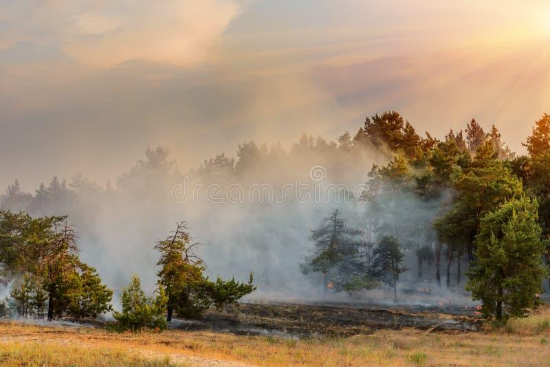 Suchej trawy palenie w wczesnej wiośnie Płonący drewno, mszarnik, tragadia i katastrofa w polu, zdjęcie royalty free