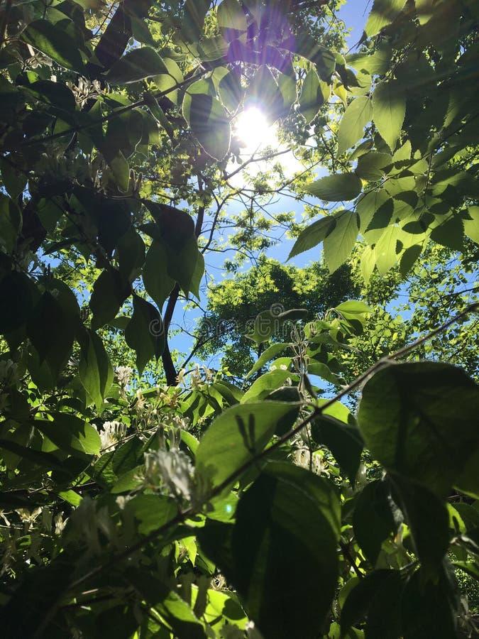 Suchen nach der Sonne lizenzfreies stockbild