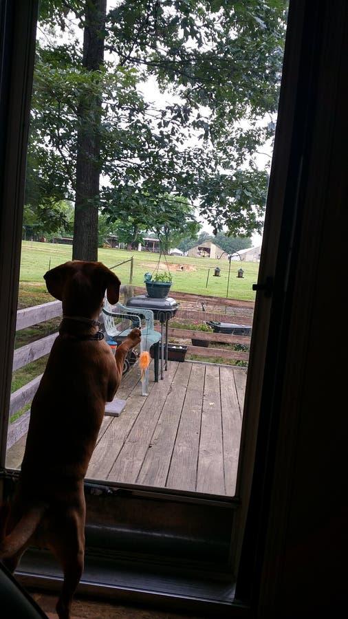 Suchen nach Eichhörnchen lizenzfreies stockfoto