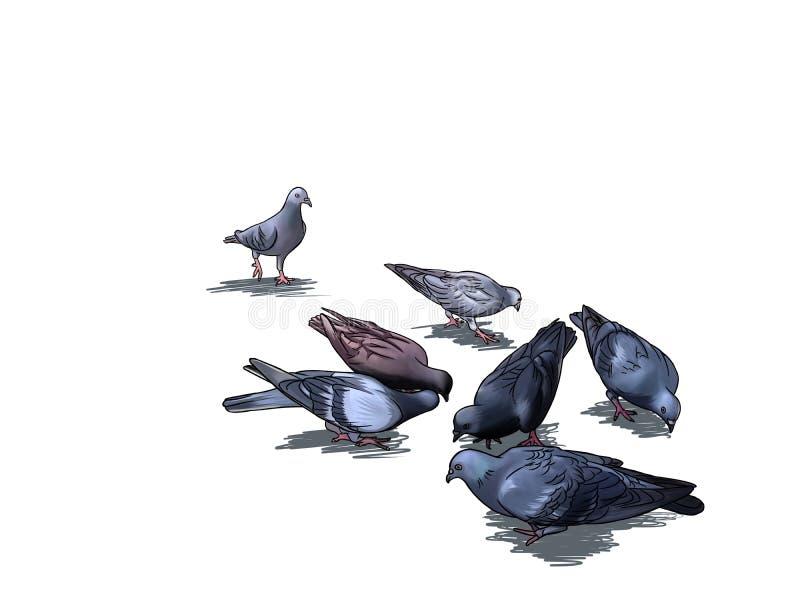 Suchvorgang mit sieben Tauben für Nahrung in der Karikaturart lizenzfreie abbildung