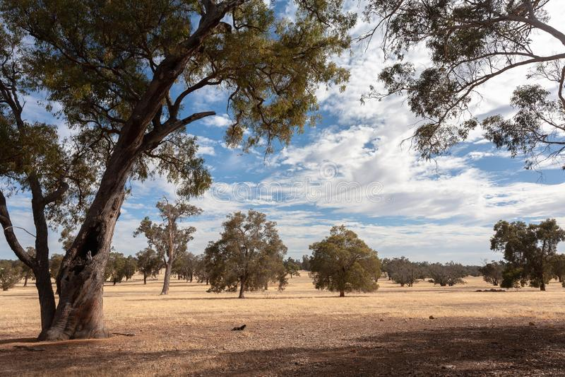 Suchy Australijski mieszkanie krajobraz z drzewami pod niebieskim niebem z białymi chmurami zdjęcie stock