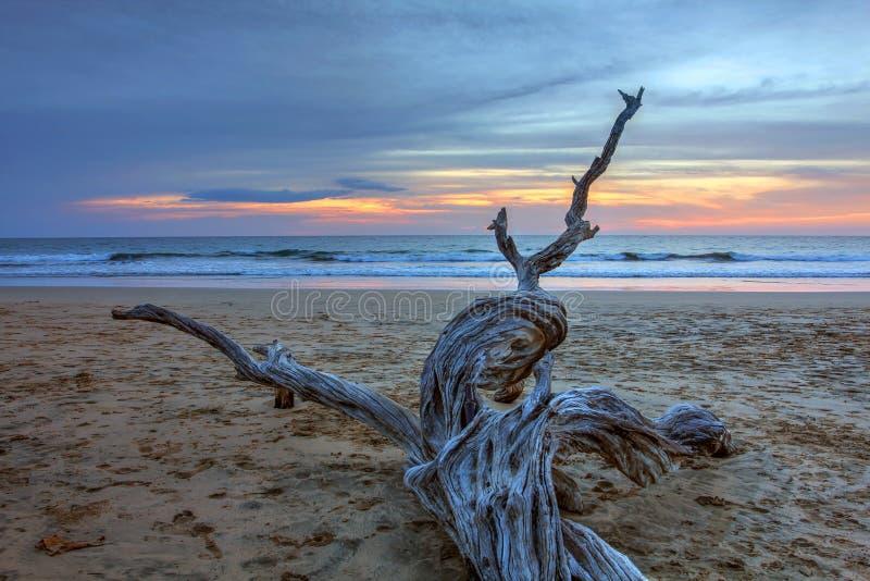 Suchy drewno przy Playa Avallena, Costa Rica obraz royalty free