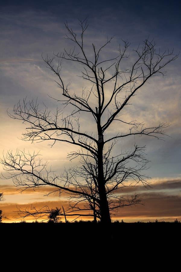Suchy drzewo na wzgórzu na zmierzchu tle obrazy royalty free