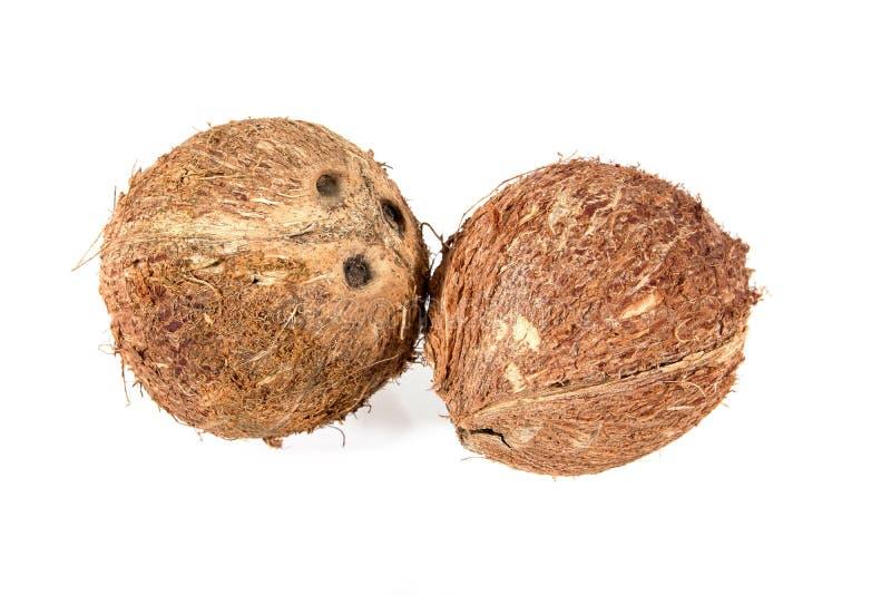 Suchy koks dla produkt spożywczy kokosowego mleka odizolowywającego na białym tle koks susz?cy zdjęcie royalty free