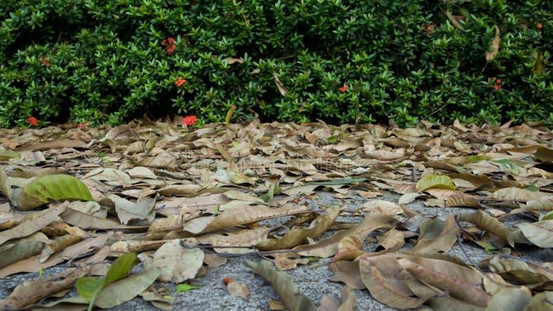 Suchy liść na ziemi fotografia stock