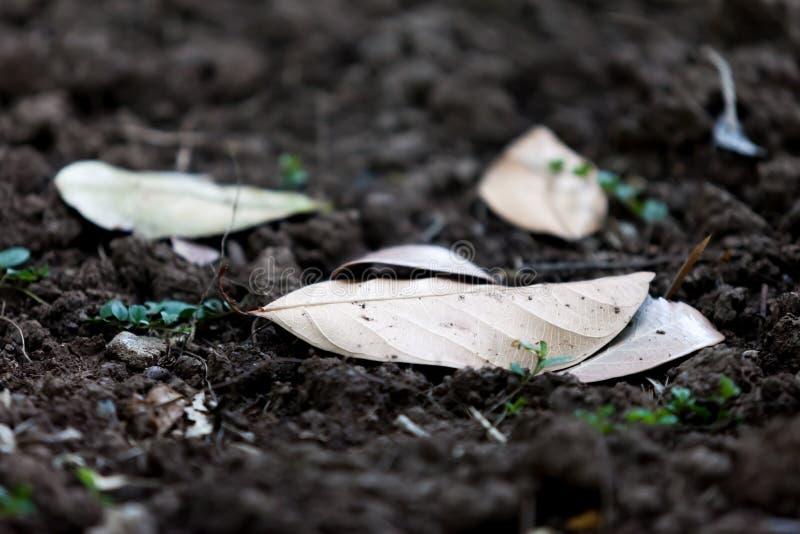 Download Suchy liść na ziemi obraz stock. Obraz złożonej z sezonowy - 57662847