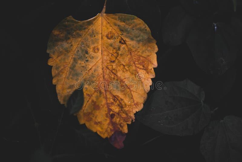 Suchy liść w ogródzie obraz stock