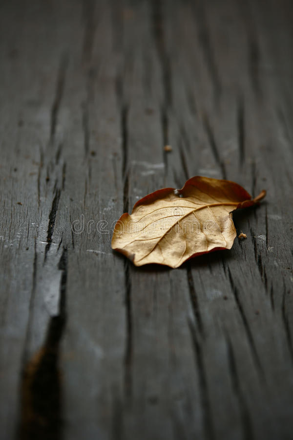 Suchy liścia zbliżenie obrazy stock