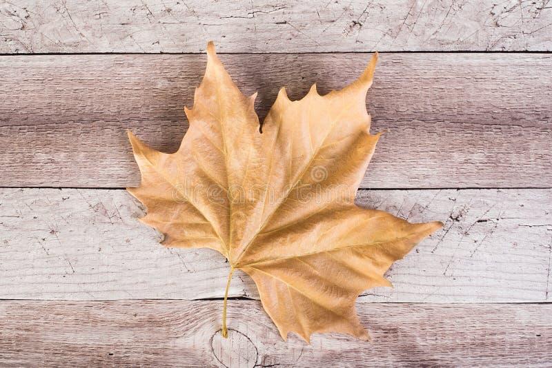 Suchy mapple liść na drewnianym tle zdjęcie royalty free