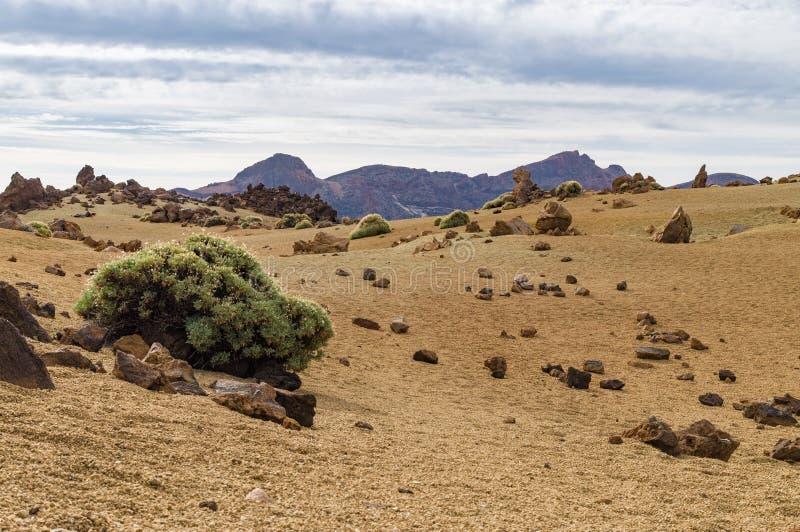 Suchy ogniowy krajobraz z rzadkim greenery obraz stock
