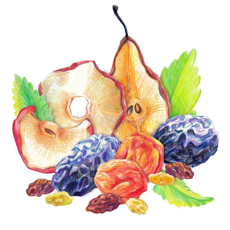 Suchy owoc set royalty ilustracja