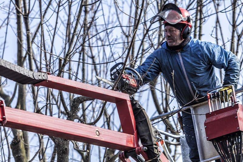 Suchy przycinać drzewa mężczyzna z piłą łańcuchową, stoi na machinalnej platformie obrazy stock