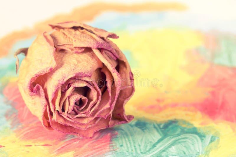 Suchy róża pączek na abstrakcjonistycznym obrazie zdjęcia stock