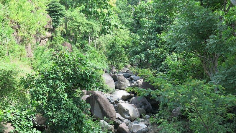 Suchy riverbed w górach na Hinduskiej wyspie Bali Ogrzewający las bez ludzkiej interwencji Luksusowa ro?linno?? w d?ungli zdjęcia stock