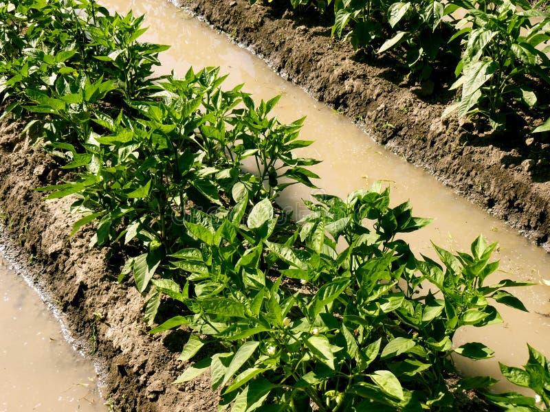 Download Suchy strefy ogrodnictwo obraz stock. Obraz złożonej z farm - 41952245