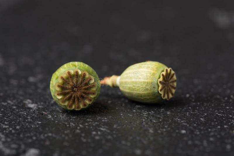Suchy zielony makowy kwiat, pudełek ziarna na czarnym tle Makro- zdjęcie stock