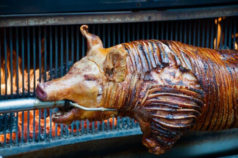 Sucking Pig Stock Photos