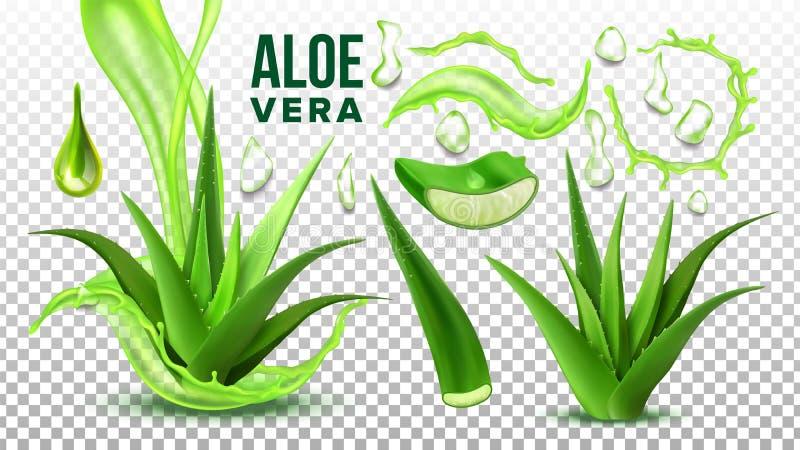 Suckulent aloe Vera Elements Set Vector för apotek royaltyfri illustrationer