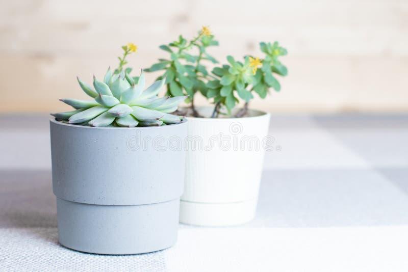 Suckulenta blommor i krukor, hemmiljö, minsta stil arkivfoton
