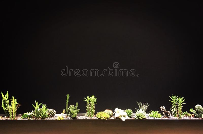 Suckulenta inlagda växter arkivfoto