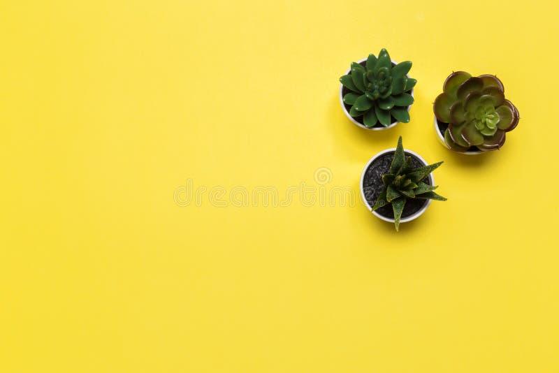 Suckulentbaner eller titelrad med olika v?xter p? en mjuk rodnad p? gul bakgrund fotografering för bildbyråer