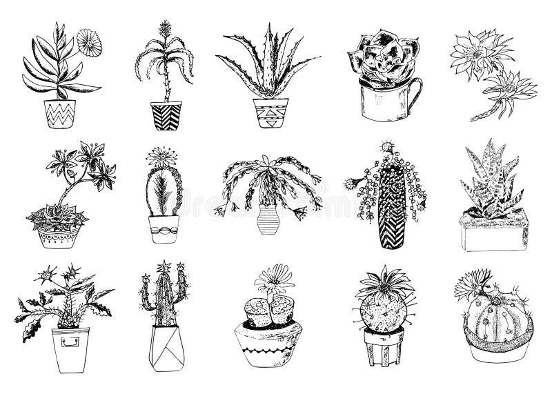 Suckulenter ställde in, kaktuns, peyoten, echeveriaen, haworthiaen, aloe vera Gröna dekorativa växter i tekoppen och krukorna blo stock illustrationer
