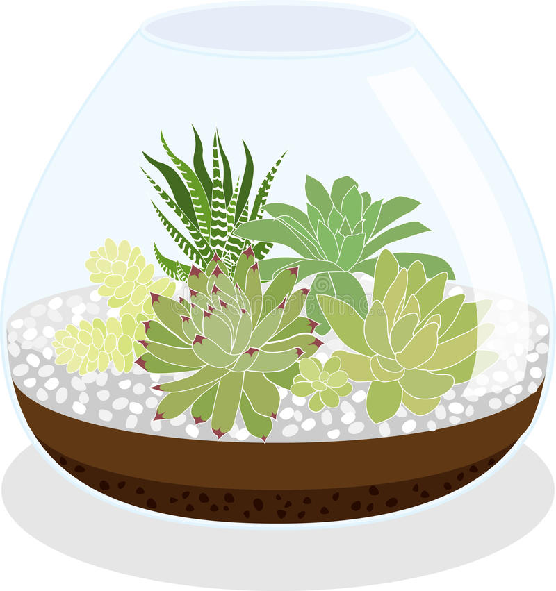 Suckulentterrarium vektor illustrationer
