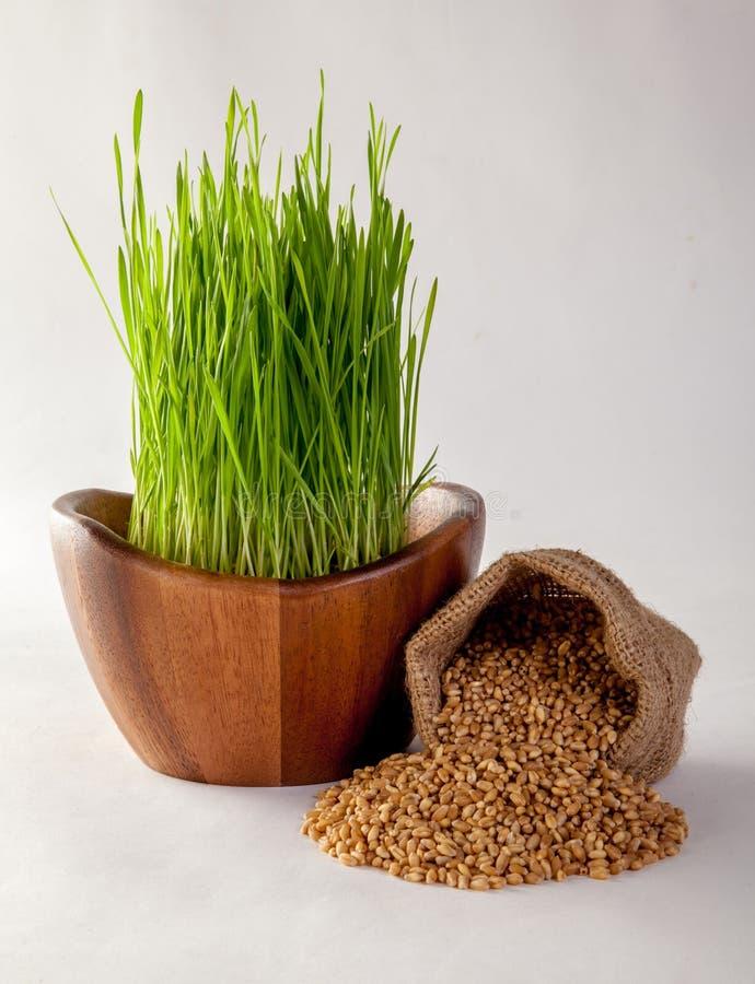 Suco da grama do trigo imagens de stock