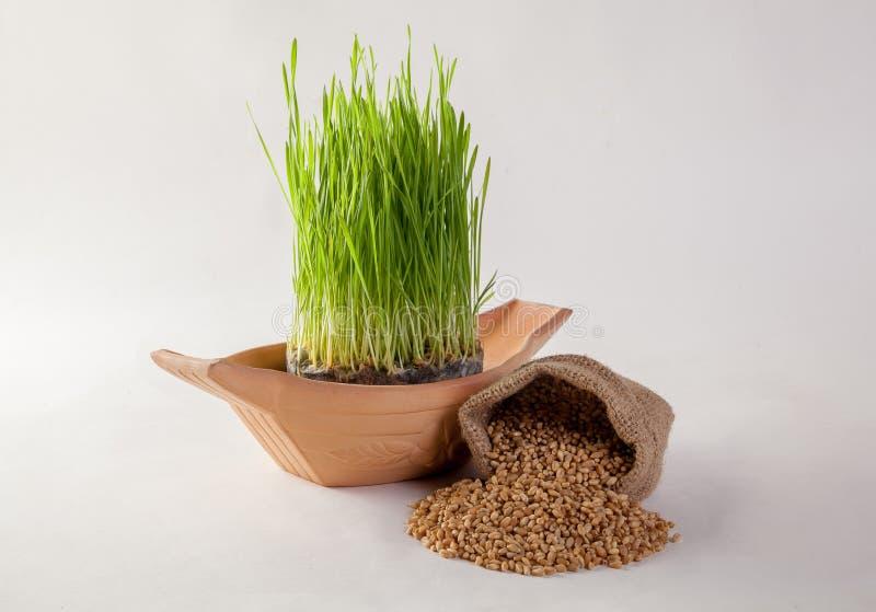 Suco da grama do trigo foto de stock royalty free