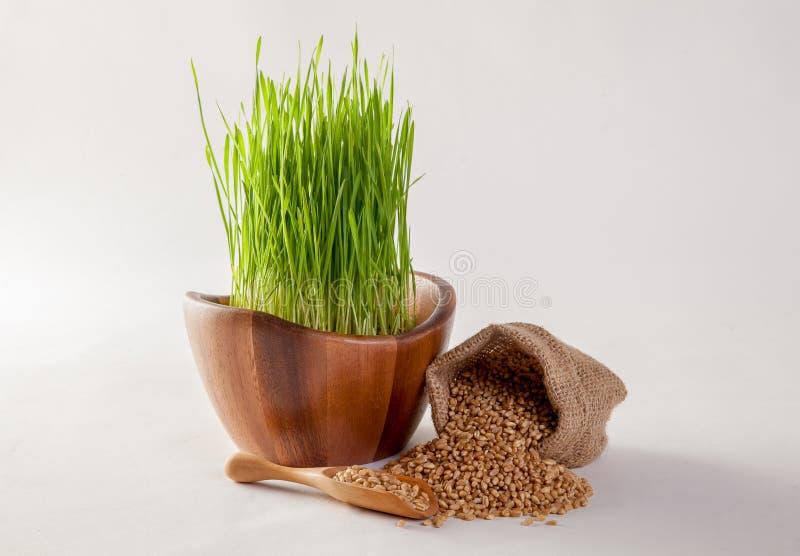 Suco da grama do trigo imagem de stock royalty free