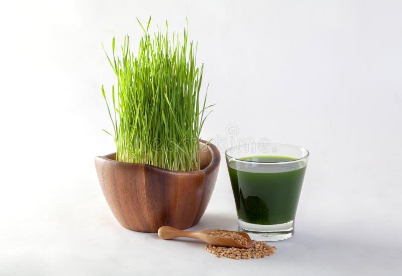 Suco da grama do trigo foto de stock