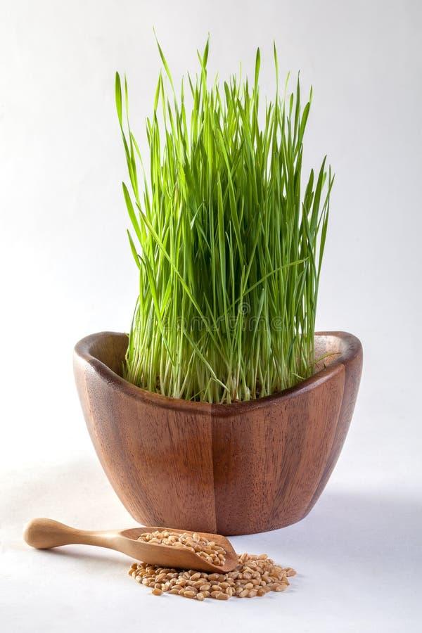 Suco da grama do trigo fotografia de stock